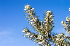 Tree on a cold winter frosty air on a Sunny day Stock Image