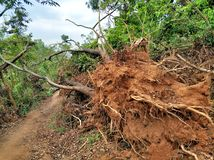 Tree collapse after typhoon stock image