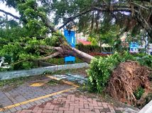 Tree collapse after typhoon royalty free stock image