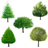Tree collection stock photography