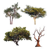 Tree collection. Four different trees isolated on white backgrou Stock Image