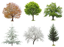 Tree collection isolated Royalty Free Stock Photo