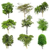 Tree collection set isolated. On white background Stock Image