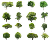 Tree collectoin isolate on white stock photography