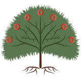 Tree coloful. Tree colorful growth plant forest icon Stock Photos