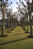 Tree Colonnade. Lovely shaped tress in a colonade leading towards a country house Royalty Free Stock Image