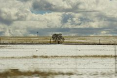 A tree on the Colorado prairie. Stock Photo