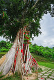 Tree with colored ribbons is believed to bring luck. Stock Images