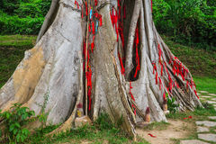 Tree with colored ribbons is believed to bring luck. Royalty Free Stock Images
