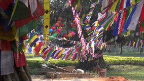 Tree with colorful buddhist flags in Lumbini, Nepal. Big tree with colorful buddhist flags in Lumbini, Nepal stock video footage