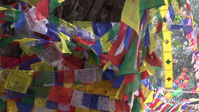 Tree with colorful buddhist flags in Lumbini, Nepal. Old big tree with colorful buddhist flags in Lumbini, Nepal stock footage