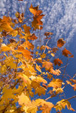Tree with colorful leaves Royalty Free Stock Photo