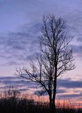 Tree and colorful sunset sky, Lithuania Stock Photos