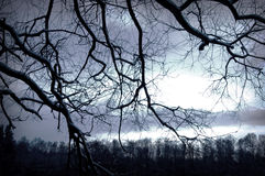 Tree conceptual image. Winter night in dark forest Royalty Free Stock Photos