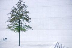 Tree in concrete royalty free stock images