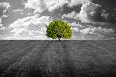 Tree on concrete plain. A green tree alone in concrete plain Royalty Free Stock Images