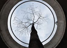Tree in concrete ring around. View of sky and tree from concrete ring around Stock Photo