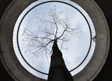 Tree in concrete ring around Stock Photo