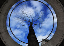 Tree in concrete ring around. View of sky and tree from concrete ring around Stock Photos