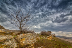 Tree at the concretion stone with moss and lichens. At early spring under heavy clouds, Stavropol kray, Russian Federation royalty free stock image