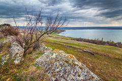 Tree at the concretion stone with moss and lichens. At early spring under heavy clouds, Stavropol kray, Russian Federation royalty free stock images