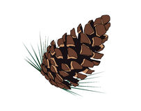 Tree cone. Illustration of an isolated tree cone Stock Image