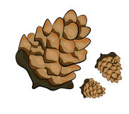 Tree cone illustration. Vector illustration of a tree cones on white background Stock Image