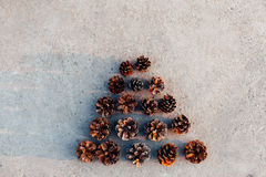 Tree of cones without the top Royalty Free Stock Photo