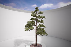Tree in construction. With gravel and sunlight Royalty Free Stock Images