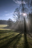 Tree in contrejour lighting. Beams of ray Royalty Free Stock Photo