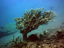 Tree Coral Stock Photo