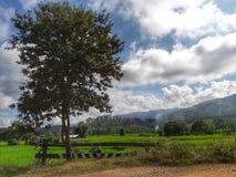 Tree. And cornfield Stock Image