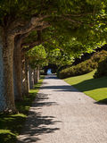Path under overhanging trees Royalty Free Stock Photos