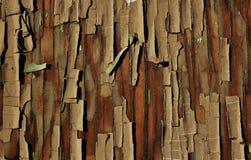 Tree cortex textured background Royalty Free Stock Image