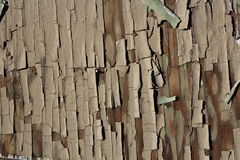 Tree cortex textured background Royalty Free Stock Photography