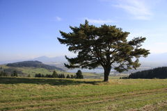 ...tree and country... Stock Images