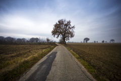 Tree on country road Royalty Free Stock Photo