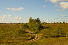 Tree on a country road. Under a blue sky with clouds Royalty Free Stock Photography