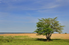 Tree in countryside Royalty Free Stock Images