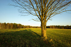 Tree in countryside Stock Image