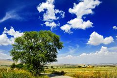 Tree in countryside landscape under blue sky with clouds, Italy Royalty Free Stock Image