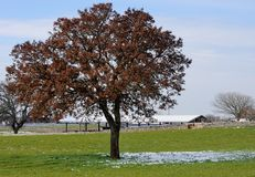 Tree in the countryside of Puglia Royalty Free Stock Photography