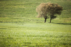 Tree in the countryside Stock Photography
