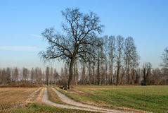 Tree in the countryside in winter Royalty Free Stock Photography