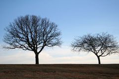 Tree Couple Royalty Free Stock Images