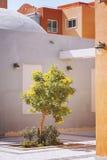 Tree in courtyard Stock Photo