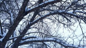 Tree cover with snow in winter. Picture of tree cover with snow in winter Royalty Free Stock Photo