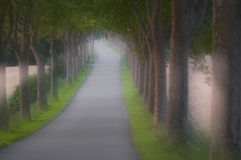 Tree covered alley Stock Photos
