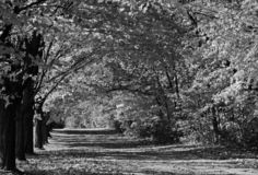 Tree Covered Drive, Black and White. Black and White rendering of a Tree Covered Drive royalty free stock photos