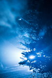 Tree covered with fresh snow at winter night Royalty Free Stock Photo